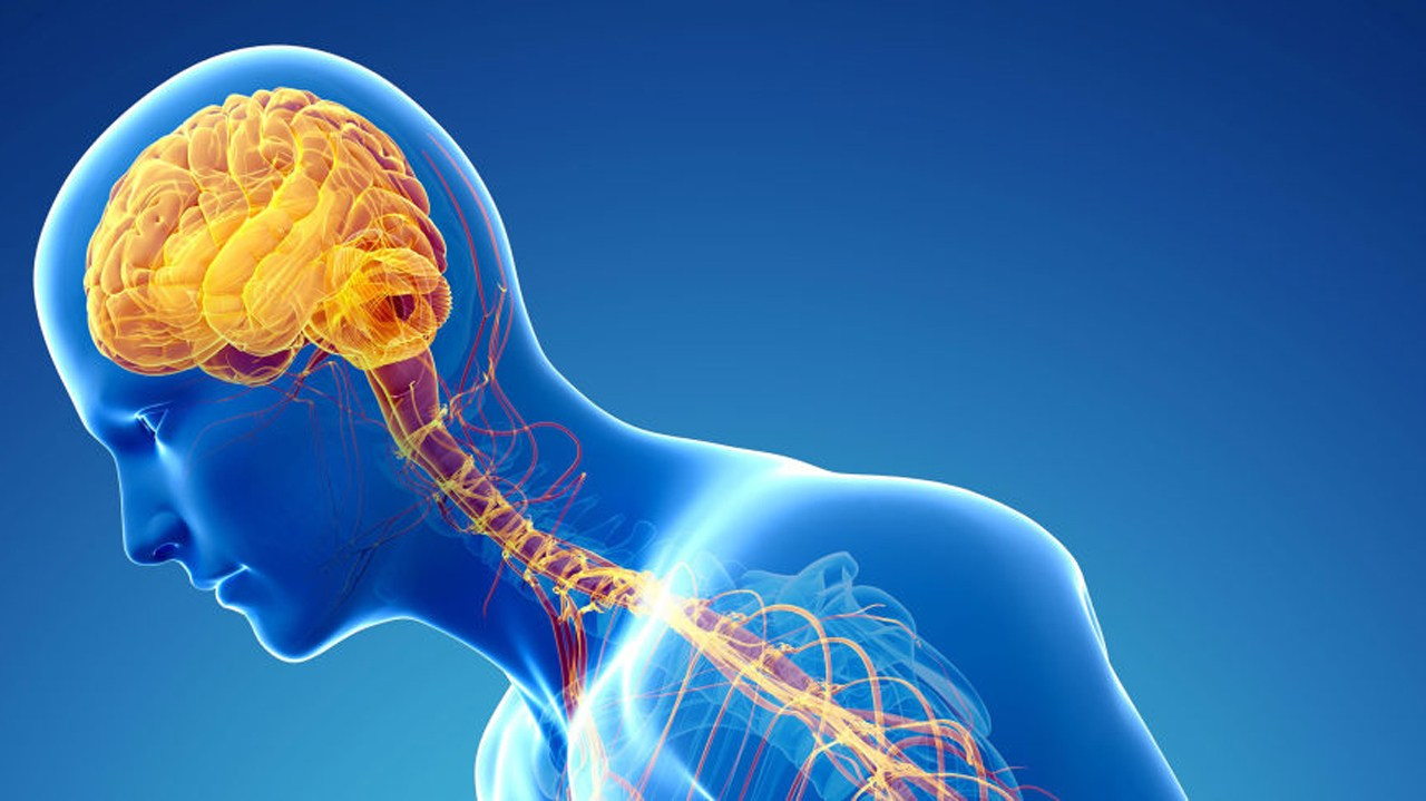 Parkinson's Disease: Managing Tips for the Elderly